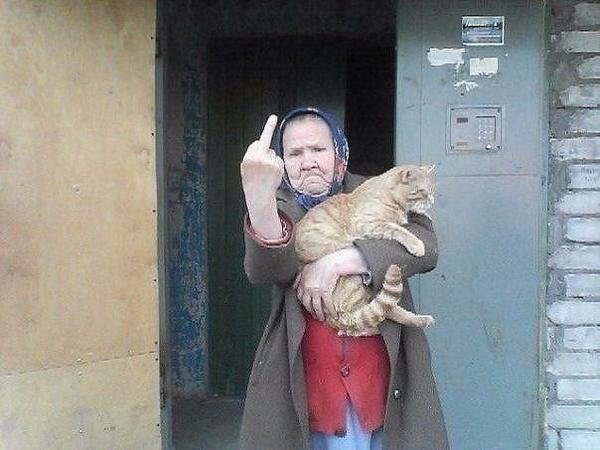 kedi-nah