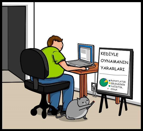 kedi oyun 8