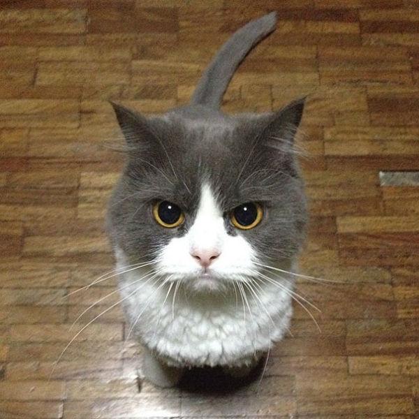 kedi81