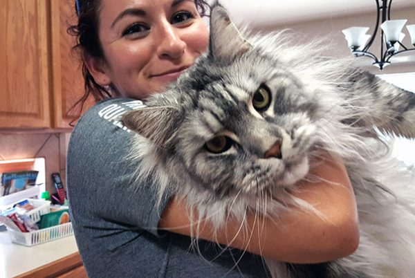 maine-coon-cats-11__605
