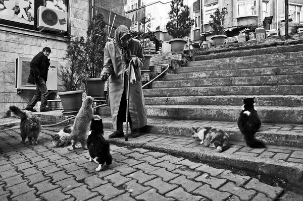 old_woman_and_cats_2_by_emregurten