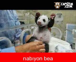 nabüün