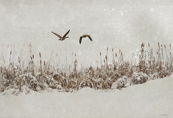 16. Kar Yağışı