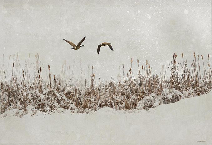 Soğuk Kış Günlerinde Içimizi Isıtacak 16 Karlı şiir Listelistcom