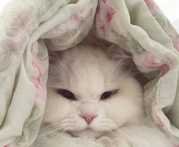 cat-f