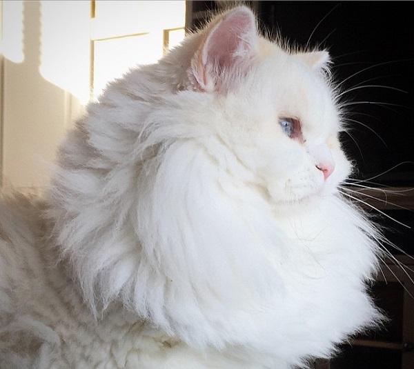 cat-found-sid