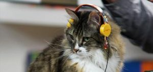 deadmau5-cat-headphones-hero