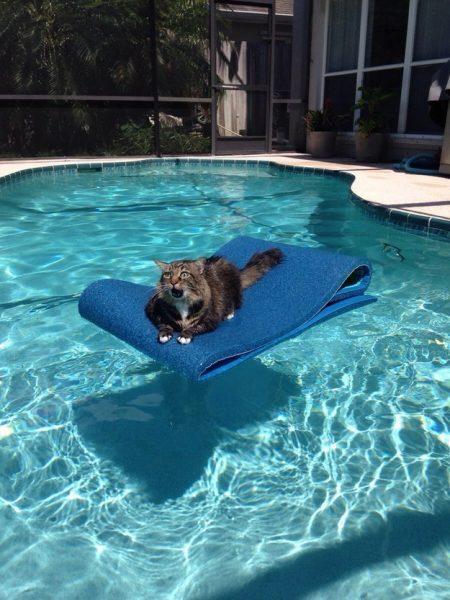 havuza.sikisan.bu.kedi