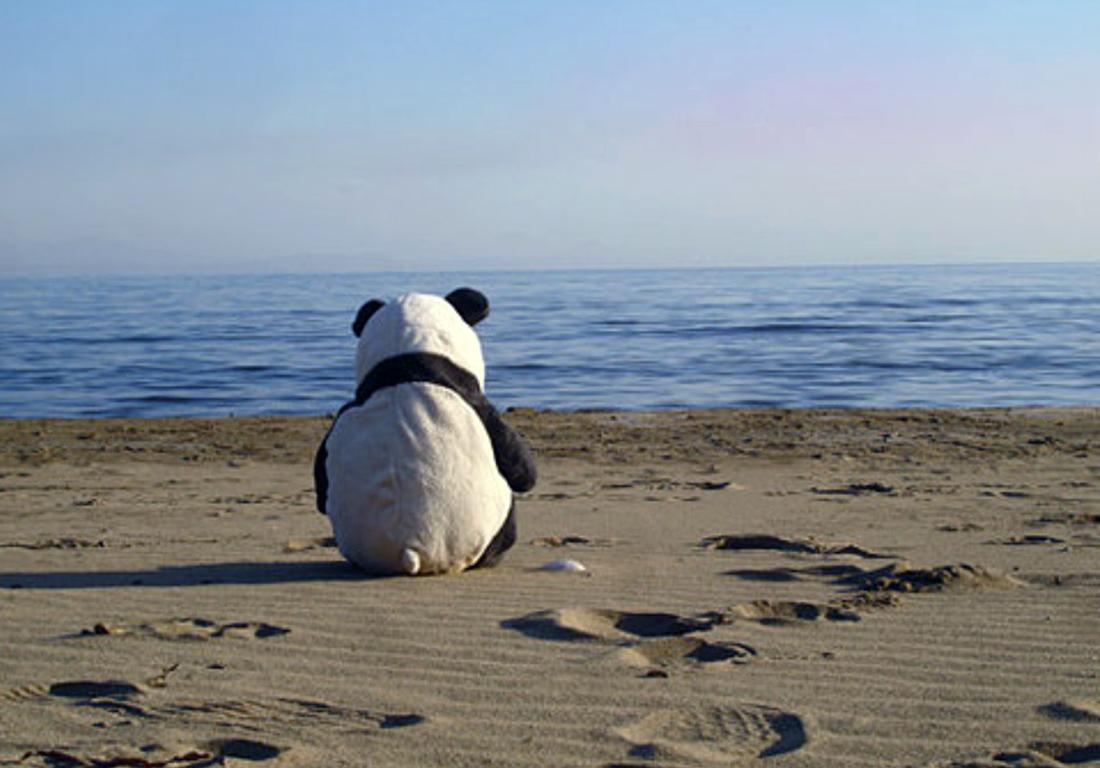 lonelybeachpanda