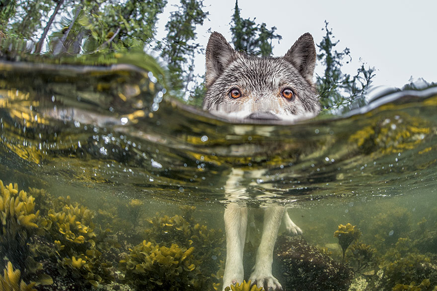 national-geographic-photo-of-the-day-internet-favor