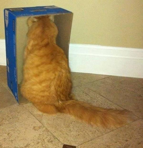 pztruhhali-kedi