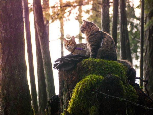 1.gezgin.kediler