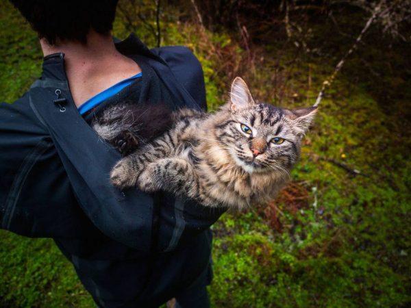 6.gezgin.kediler