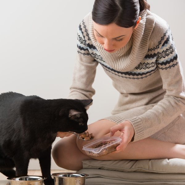 600px-woman-feeding-cat
