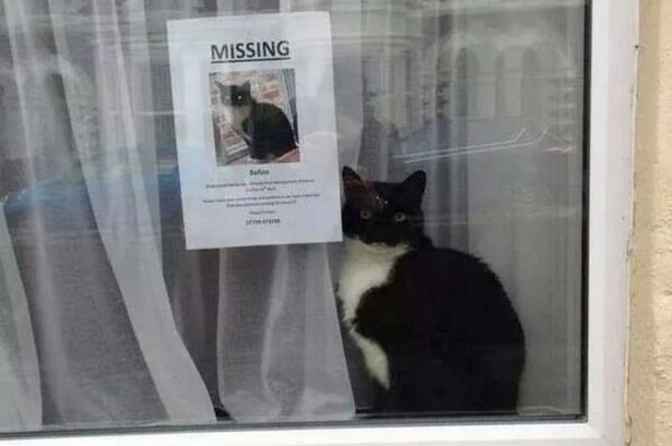 Lost-cat-found-near-lost-cat-poster