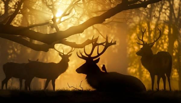 fotophotoshop-geyik