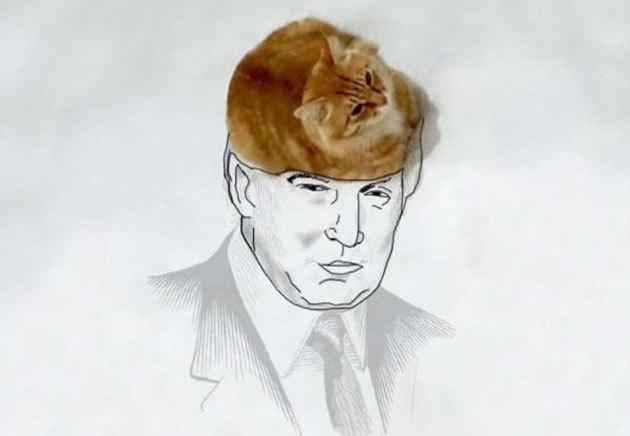 kedi cizim  12