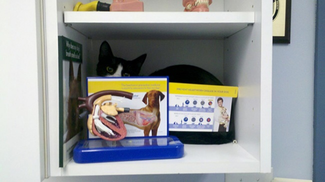 saklanan kedi 11