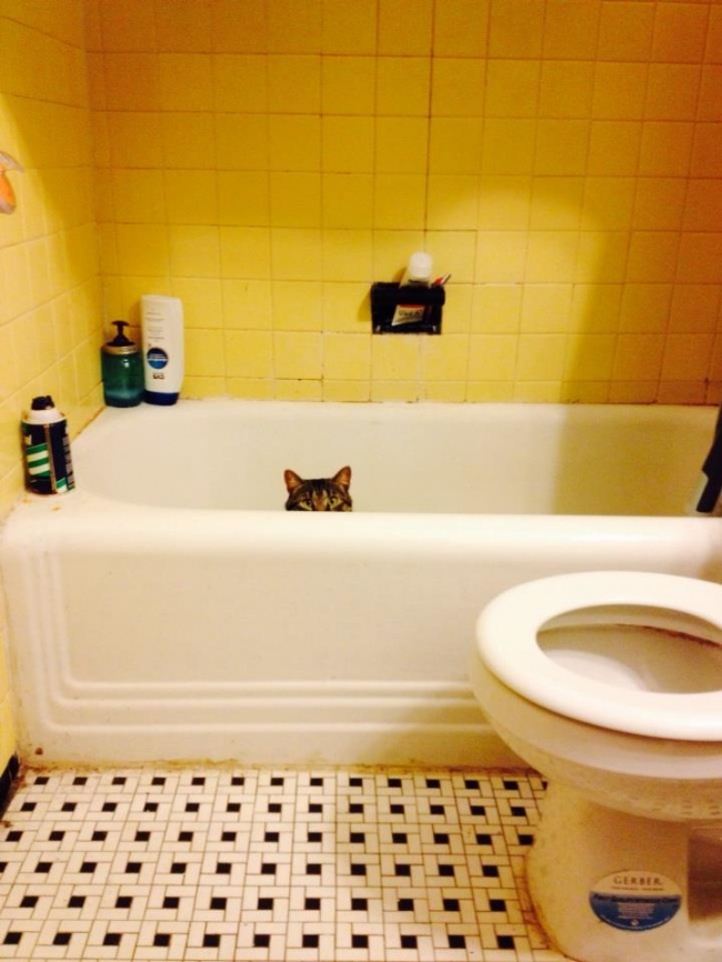 saklanan kedi 13