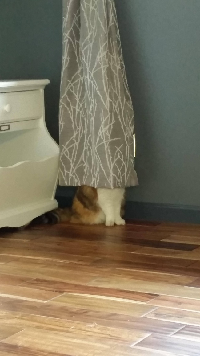 saklanan kedi 15