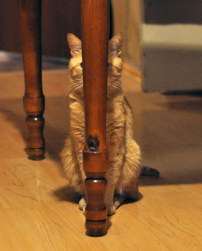 saklanan kedi 16