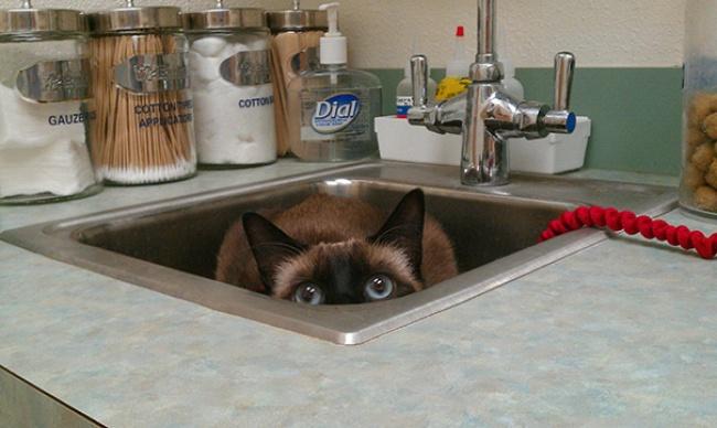 saklanan kedi 2