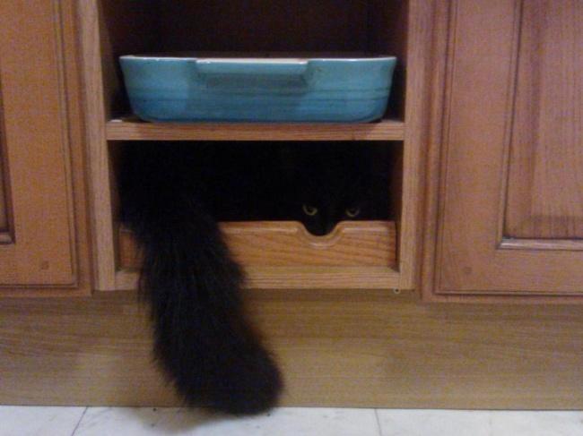 saklanan kedi 3