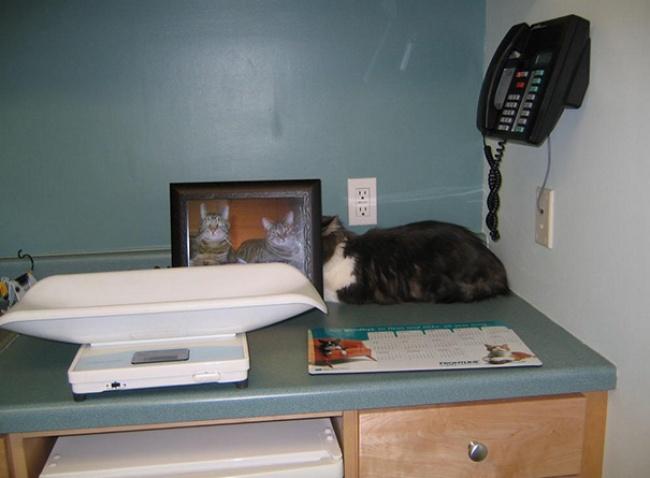 saklanan kedi 6