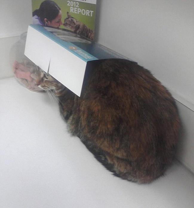 saklanan kedi 9
