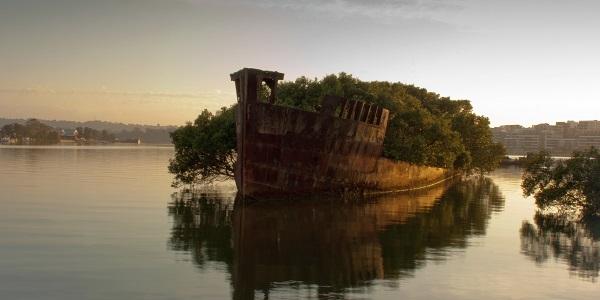 1-Bu-gemi-102 yasinda-yuzen-bir-orman