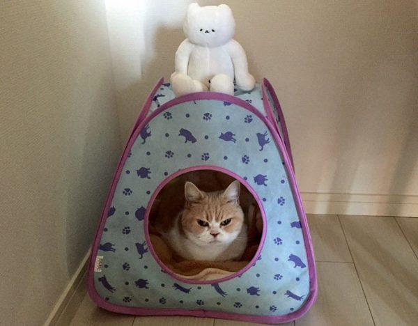 10.japon.grumpy.cat