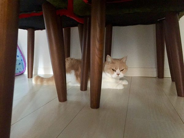 12.japon.grumpy.cat