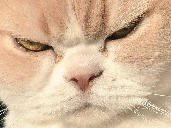 14.japon.grumpy.cat