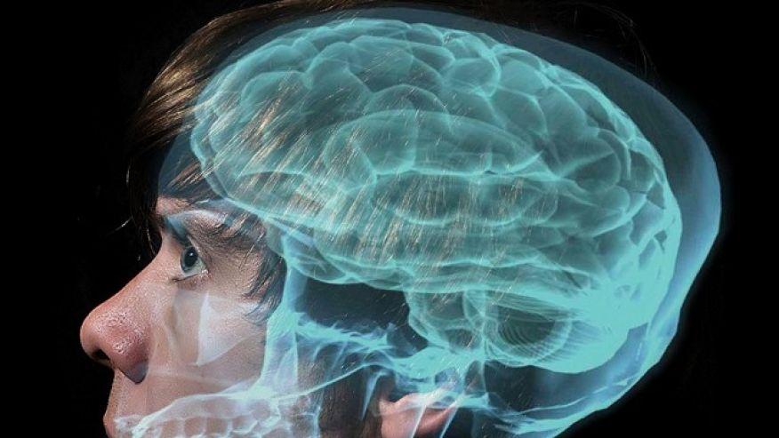 2.Erkek beyni