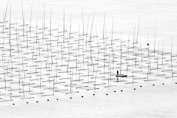 Farming the Sea