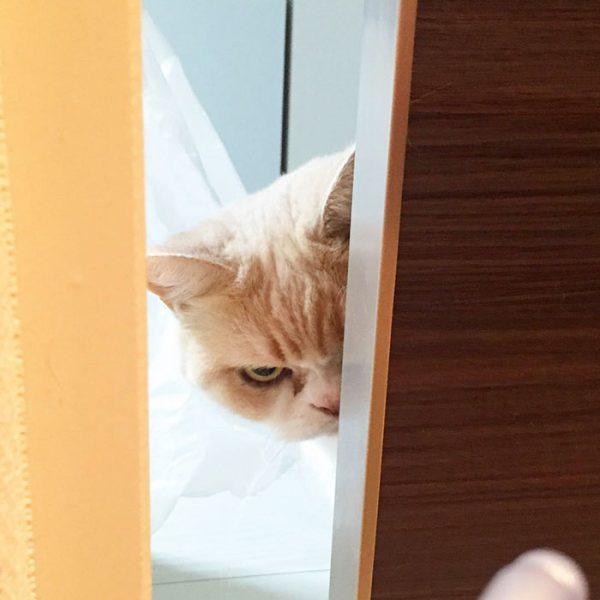 2.japon.grumpy.cat