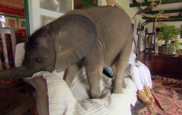 3.bebek.fil.moyo