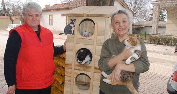 3.toplu.kedi.evi.fikri