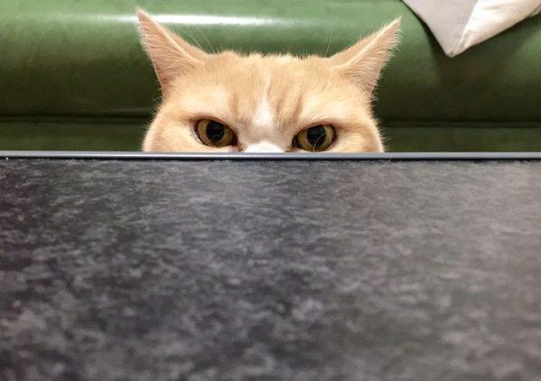 4.japon.grumpy.cat