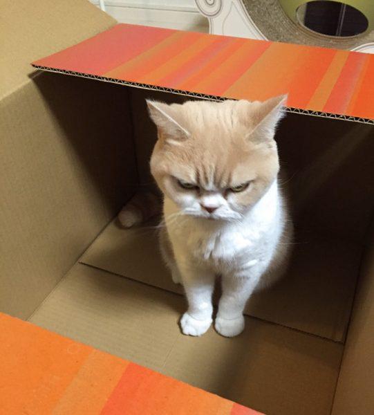 5.japon.grumpy.cat