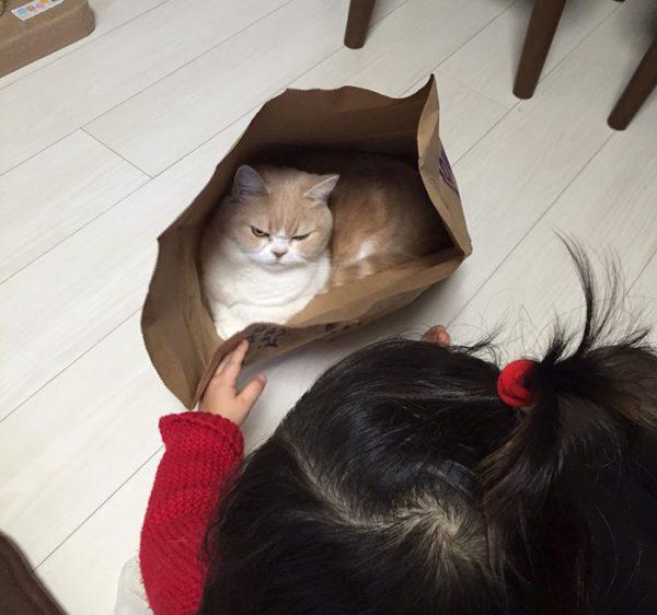 6.japon.grumpy.cat