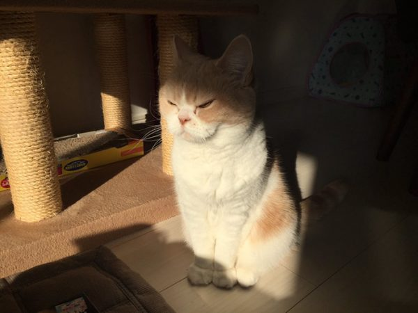 8.japon.grumpy.cat