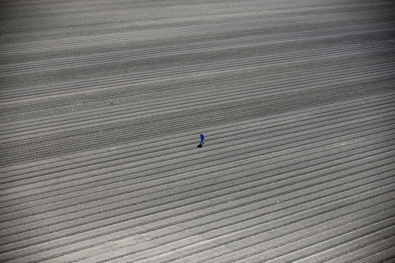 A worker walks through farm fields in Los Banos