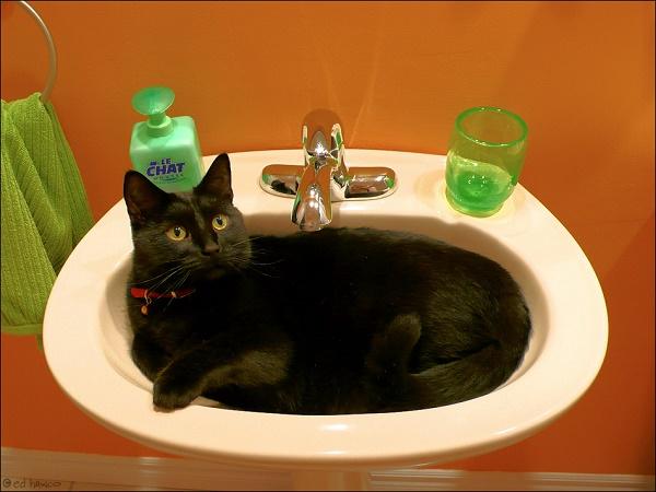 cat-in-sink