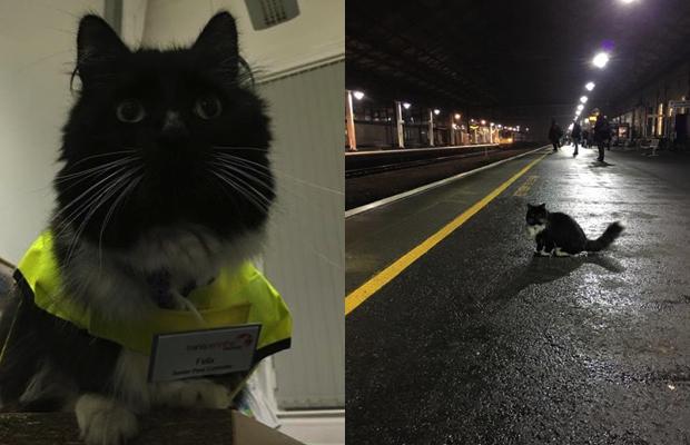 Tren Istasyonunda çalışarak Mamasının Peşinde Koşan Tatlı Kedi Felix