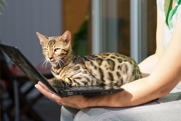 Cat on Notebook