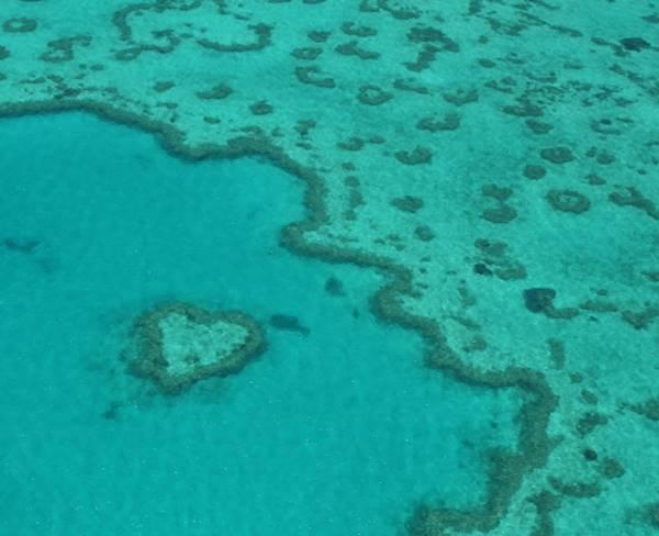 subat10. Kalp Resifi-Avustralya