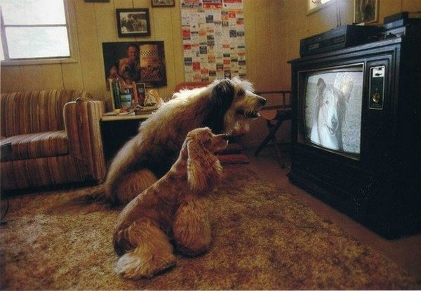 what-do-the-dogs-see-when-watching-tv04