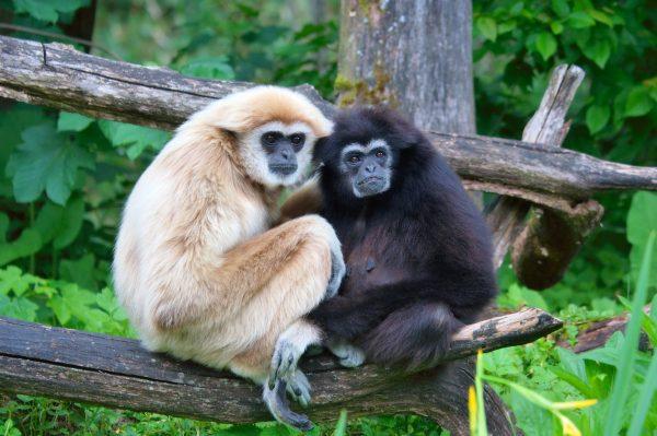 1.tek.esli.gibbons