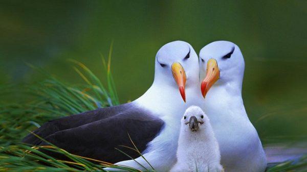 11.tek.esli.albatros